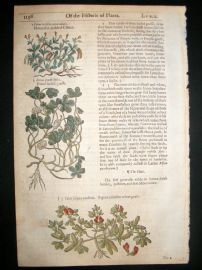 Gerards Herbal 1633 Hand Col Botanical Print. Lotus, Four leaved Grass